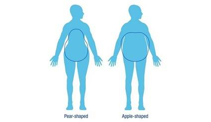 Illustration of different body shapes.
