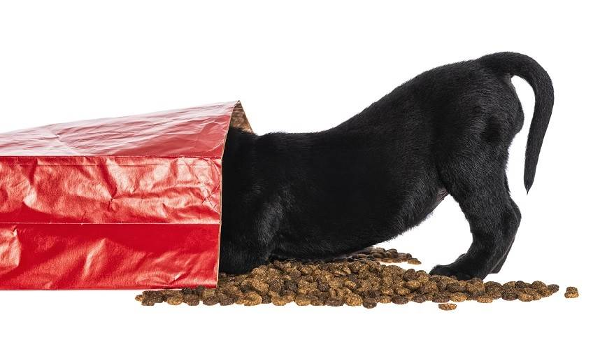 Dog in a bag of dog food.