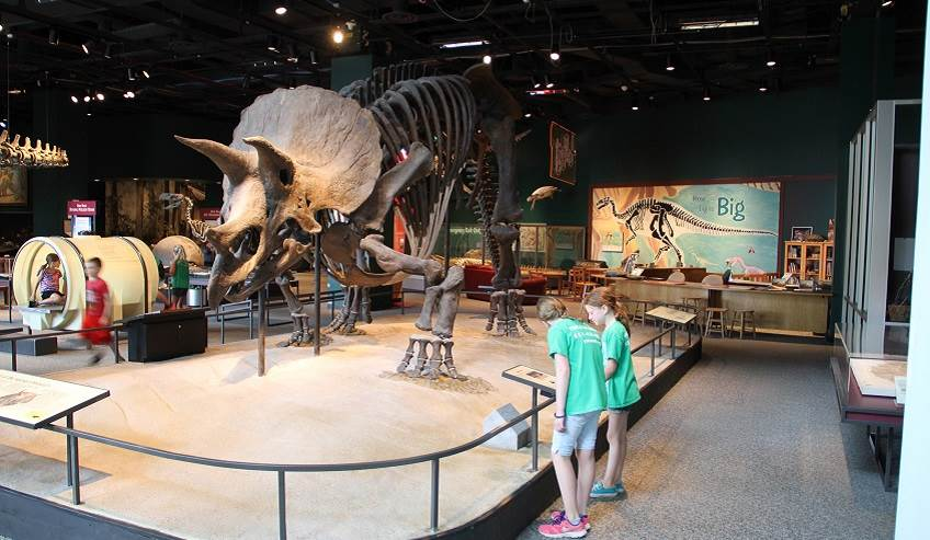 The Triceratops at the Science Museum of Minnesota was once repaired with H.B. Fuller adhesives.