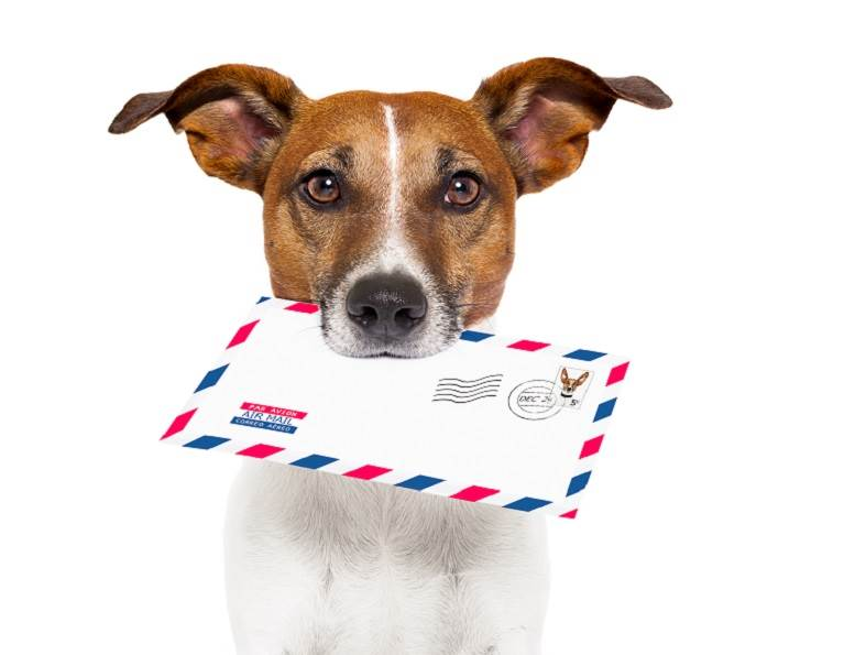 Dog with an envelope in his mouth.