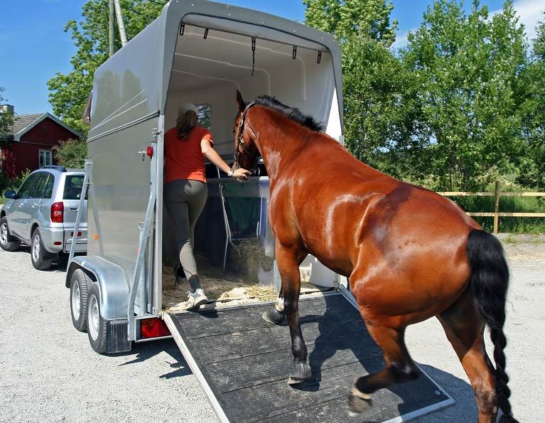 Horse loading into a trailer.